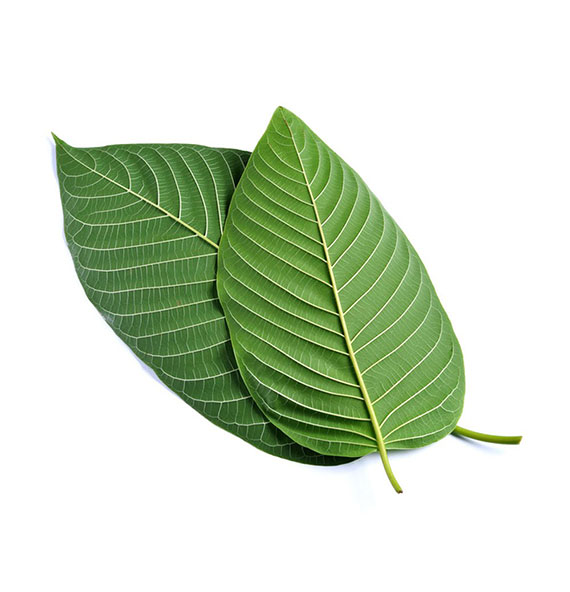 We have the best kratom prices in Columbus, and Bellevue near Cincinnati